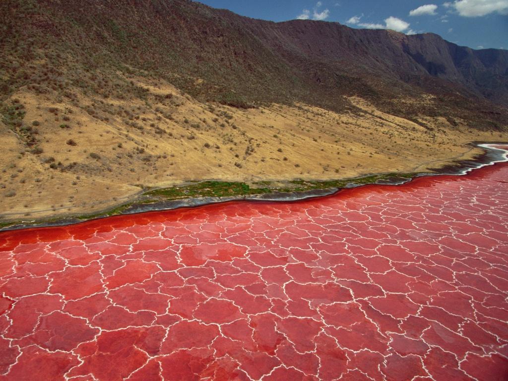 Hồ nước tử thần hóa đá động vật rơi xuống