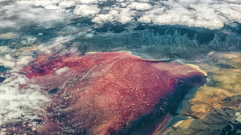 Hàng triệu hồng hạc lội giữa hồ nước hóa đá động vật
