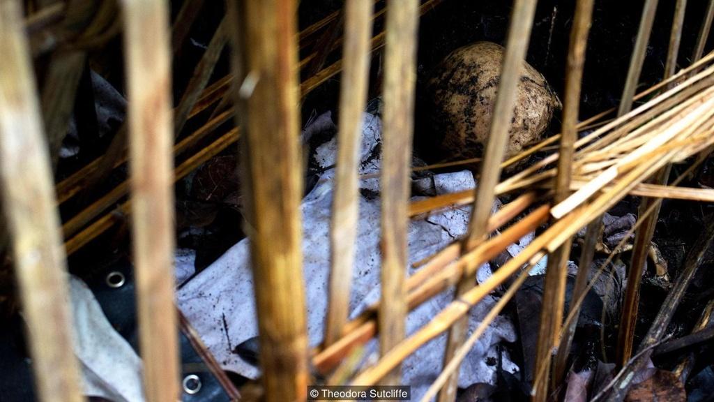Tuc phoi thay nguoi chet trong long tre tren dao Bali hinh anh 12