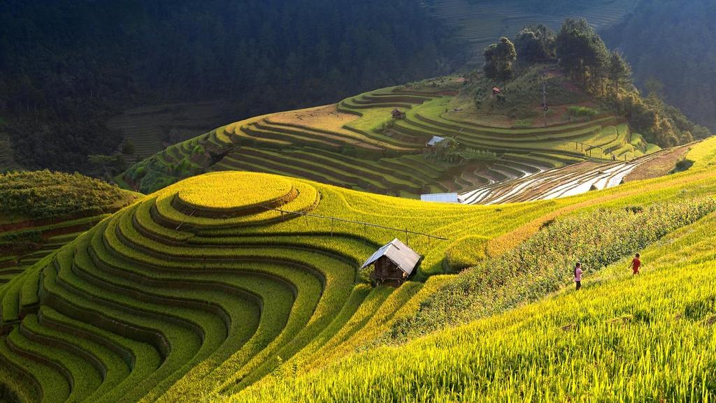 Best tours in Vietnam