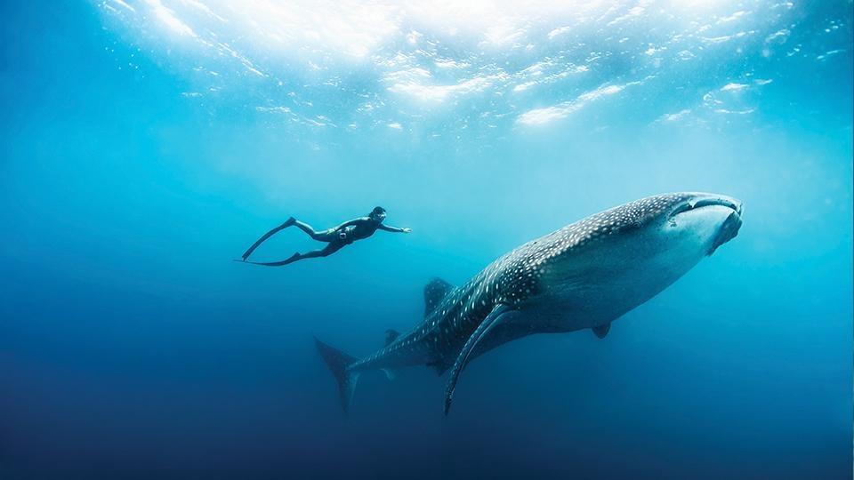 Thien duong duoi long dai duong o Maldives hinh anh 3