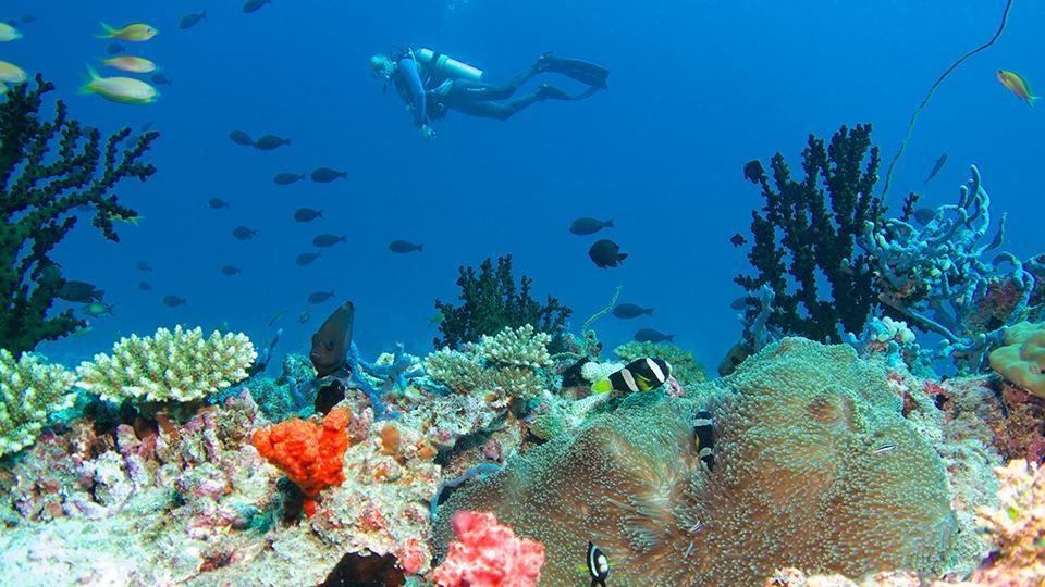 Thien duong duoi long dai duong o Maldives hinh anh 6