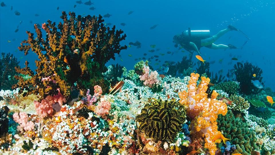 Thien duong duoi long dai duong o Maldives hinh anh 5