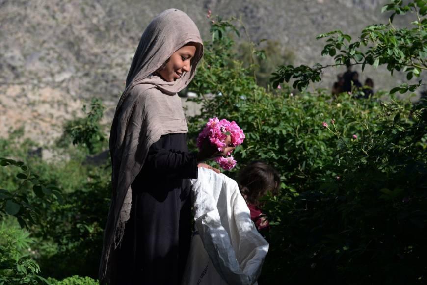 Trong hoa hong thay anh tuc, nong dan Afghanistan tan huong thanh cong hinh anh 3