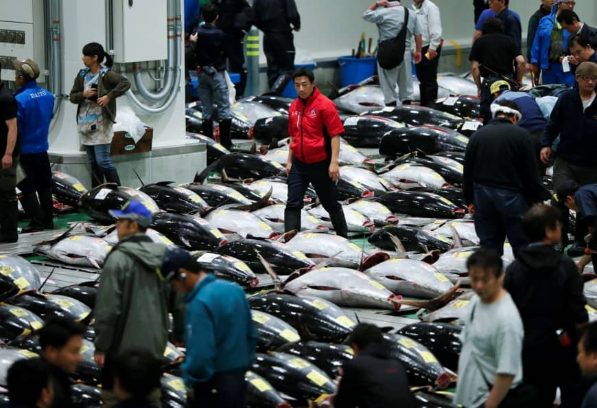 Chợ cá lớn nhất thế giới ở Nhật bốc mùi sau 1 tháng mở cửa