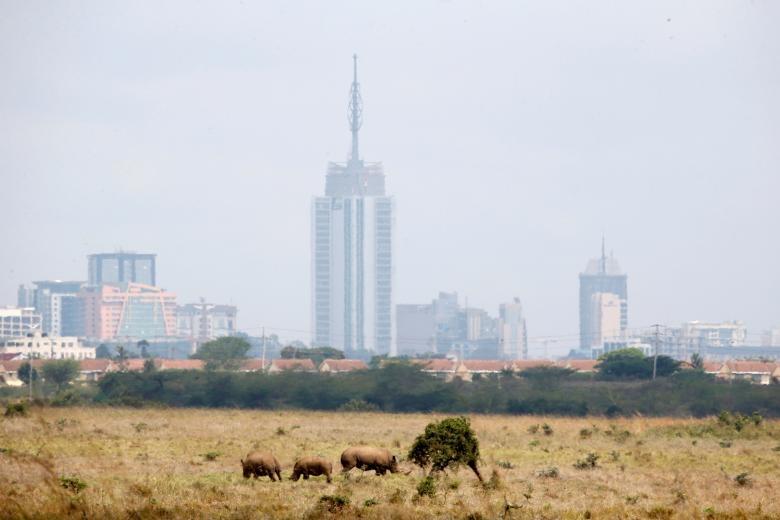 Nairobi - thu do duy nhat the gioi dong vat hoang da tu do di lai hinh anh 12