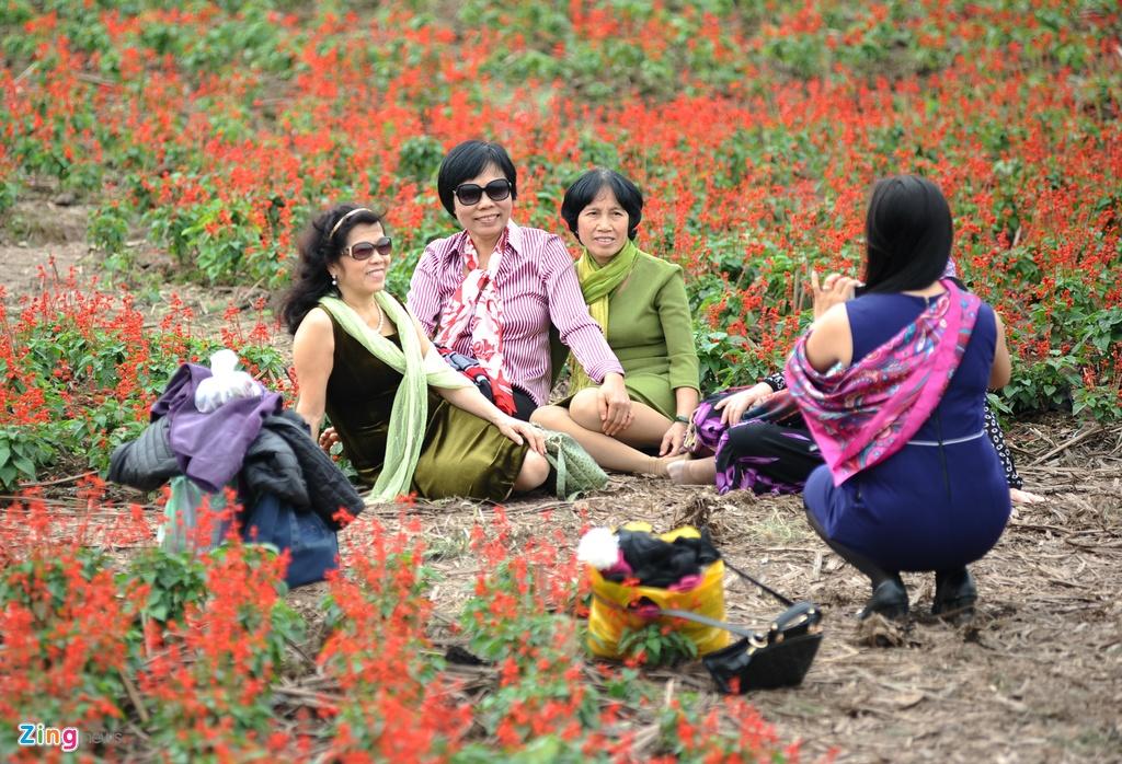 Canh tan nat o thung lung hoa sau khi mo cua mien phi hinh anh 10 Chỉ có một số ít người vào sớm từ khi bảo vệ chưa đến hoặc có quen biết với chủ vườn hoa mới được vào chụp ảnh.