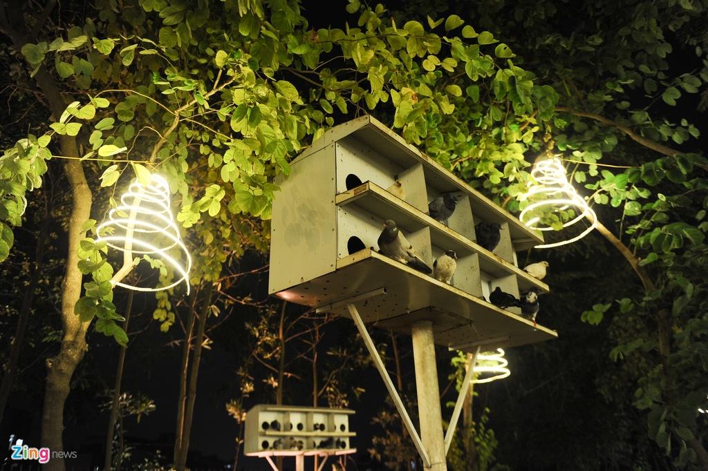 Khu vuon Noel dep long lay cua sinh vien Thang Long hinh anh 2 Nơi đây vốn là nơi tự học, thư giãn của sinh viên trường. Suốt bốn mùa, vườn cây luôn xanh tốt với những chú chim bồ câu thư thả kiếm ăn.