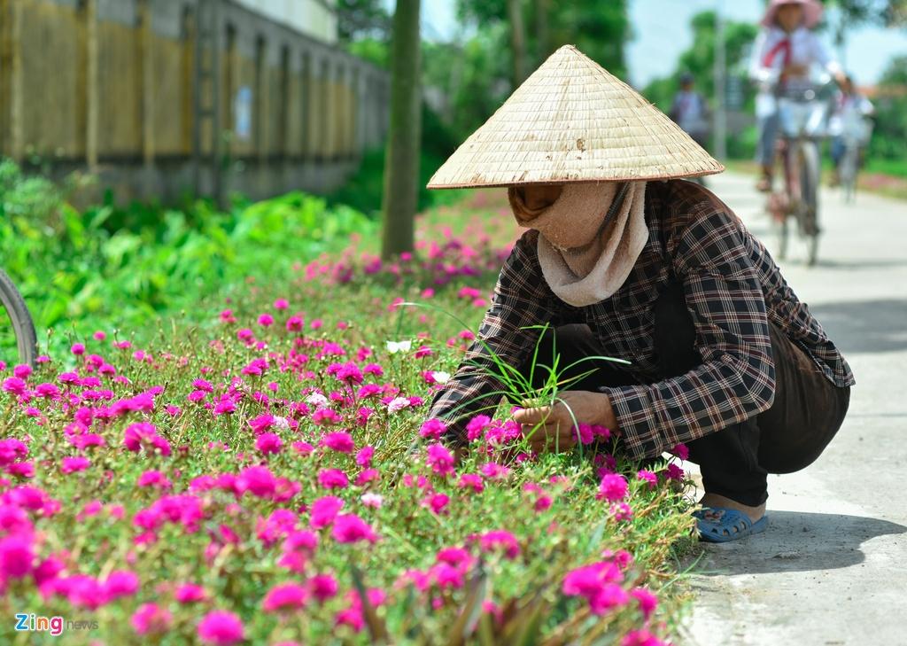 Duong hoa muoi gio doc dao nhat Ha Noi hinh anh 8