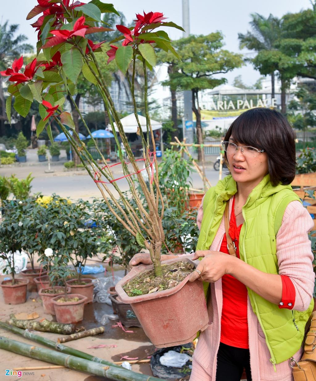 Tieu thuong Ha Noi cung dap nat hoa dao de tranh bi ep gia hinh anh 5