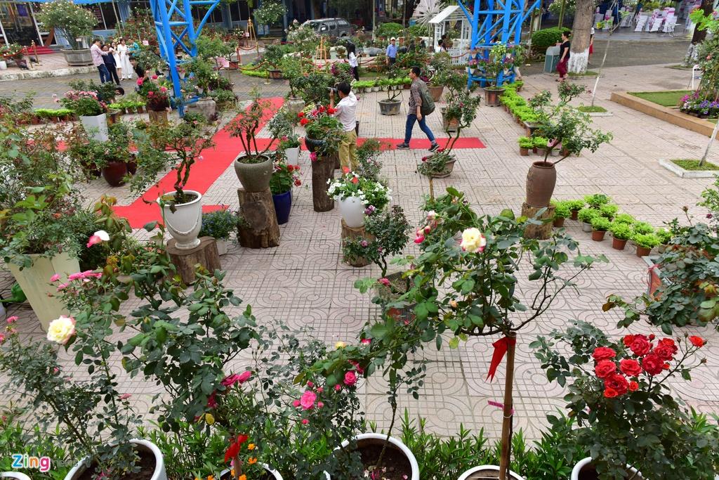 Hang nghin cay hoa hong Bulgaria khoe sac truoc le hoi hinh anh 1