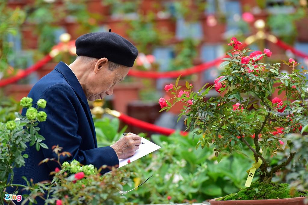Hang nghin cay hoa hong Bulgaria khoe sac truoc le hoi hinh anh 6
