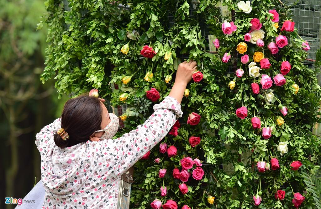 Hang nghin cay hoa hong Bulgaria khoe sac truoc le hoi hinh anh 9