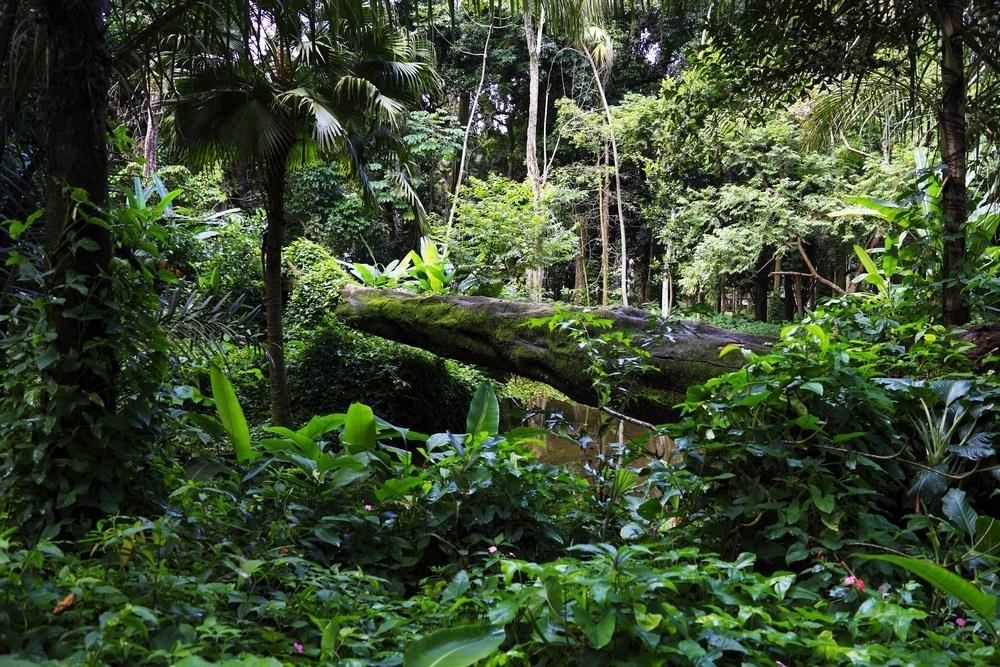 Khong chi Amazon, nhung khu rung nay cung dang bi de doa hinh anh 6