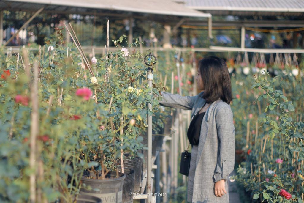 4 lang hoa noi tieng o mien Tay mua giap Tet hinh anh 13 image_6483441.JPG