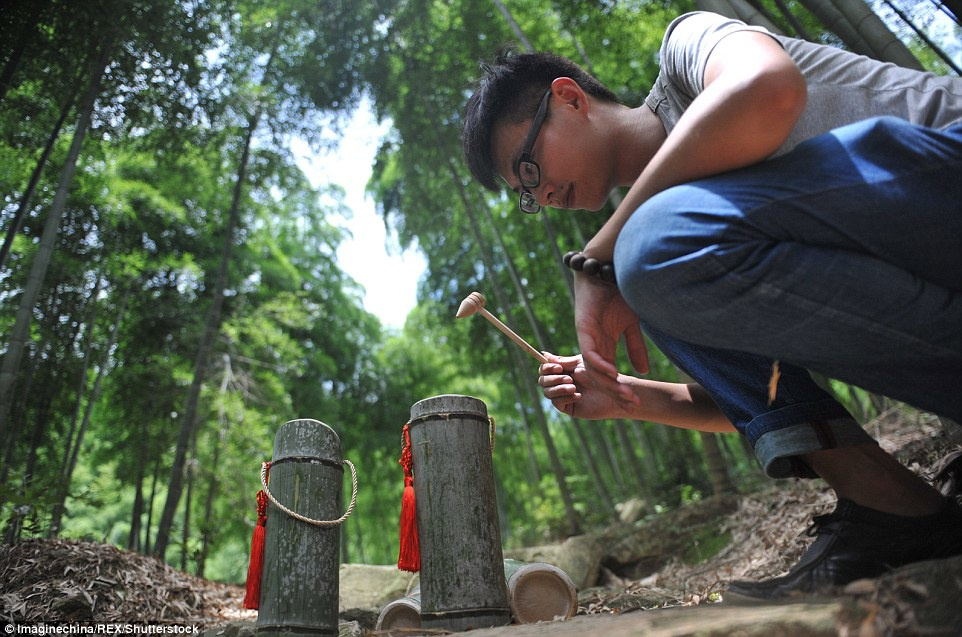 Kham pha ky thuat u ruou trong than tre cua Trung Quoc hinh anh 4 3661691E00000578_3697079_A_Chinese_worker_uses_a_wooden_hammer_to_knock_at_a_node_of_bamb_a_6_1468920697200.jpg