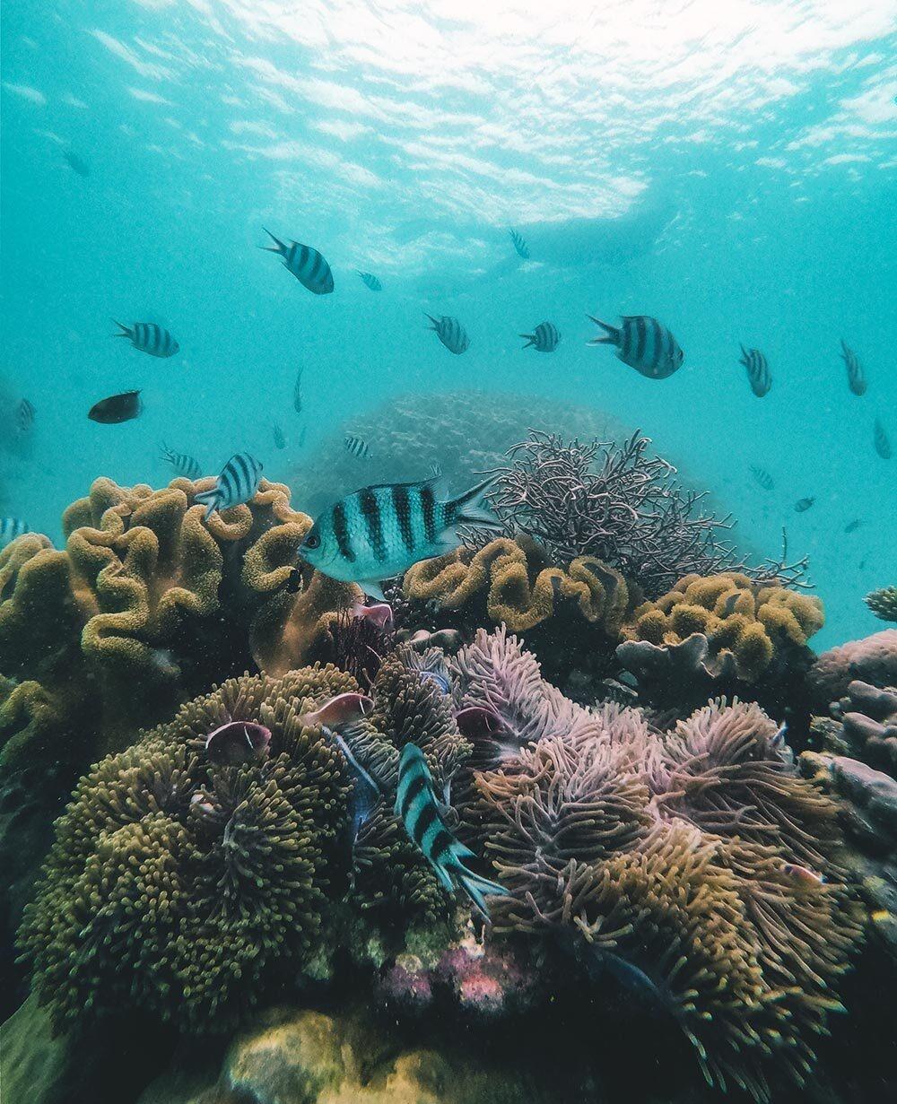 - Alexx_Hayward_1590393006 - Trải nghiệm lặn biển ngắm san hô trên đảo ngọc Phú Quốc