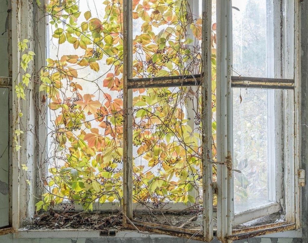 'Thanh pho ma' Pripyat hoang tan hon 30 nam sau tham hoa Chernobyl hinh anh 10