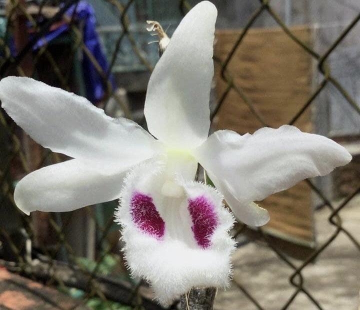 Hiem hoa tu hoa lan dot bien anh 1