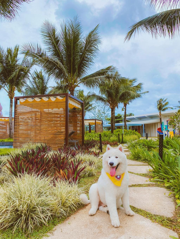Phu Quoc anh 4  - 2 - Kinh nghiệm vi vu Phú Quốc cùng thú cưng