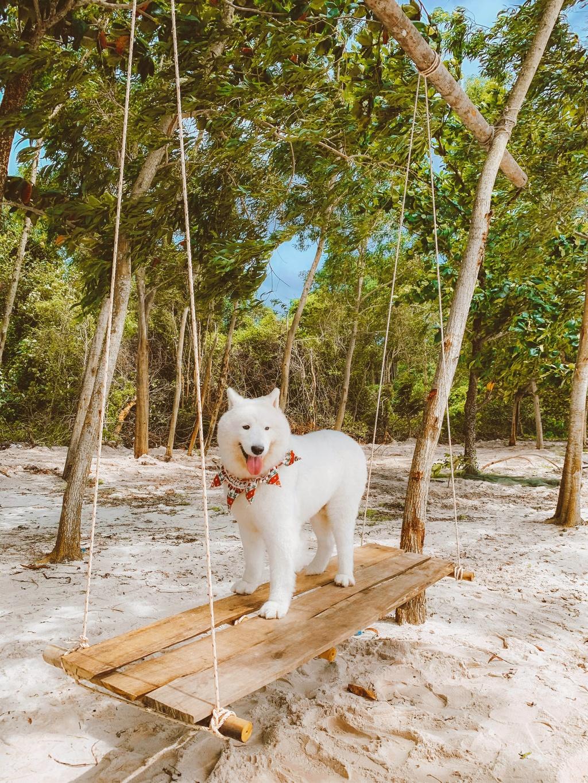 Phu Quoc anh 5  - 3 - Kinh nghiệm vi vu Phú Quốc cùng thú cưng