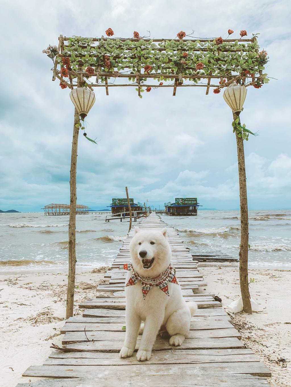 Phu Quoc anh 2  - 5 - Kinh nghiệm vi vu Phú Quốc cùng thú cưng