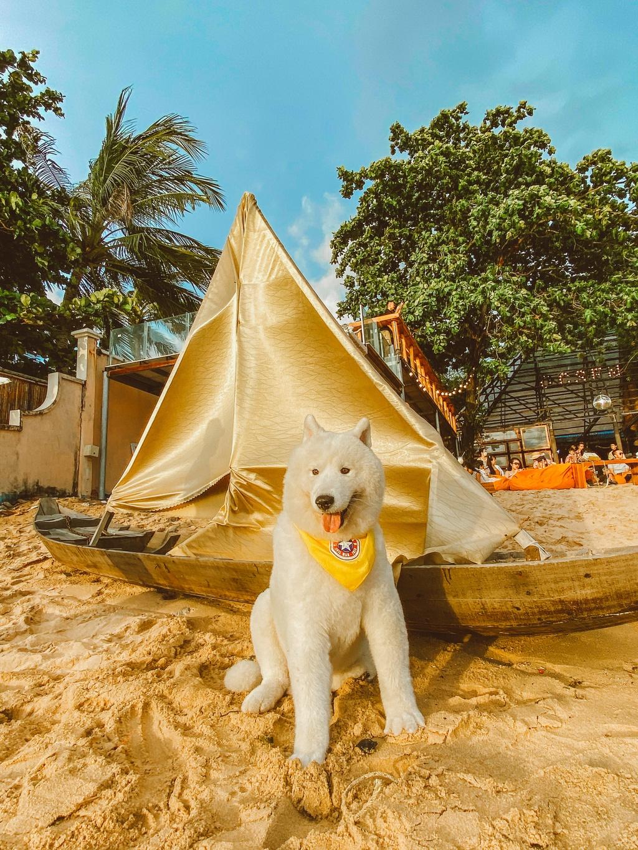 Phu Quoc anh 11  - 6 - Kinh nghiệm vi vu Phú Quốc cùng thú cưng