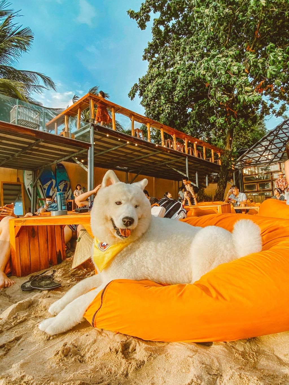 Phu Quoc anh 12  - 8 - Kinh nghiệm vi vu Phú Quốc cùng thú cưng