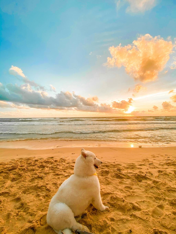 Phu Quoc anh 13  - 9 - Kinh nghiệm vi vu Phú Quốc cùng thú cưng