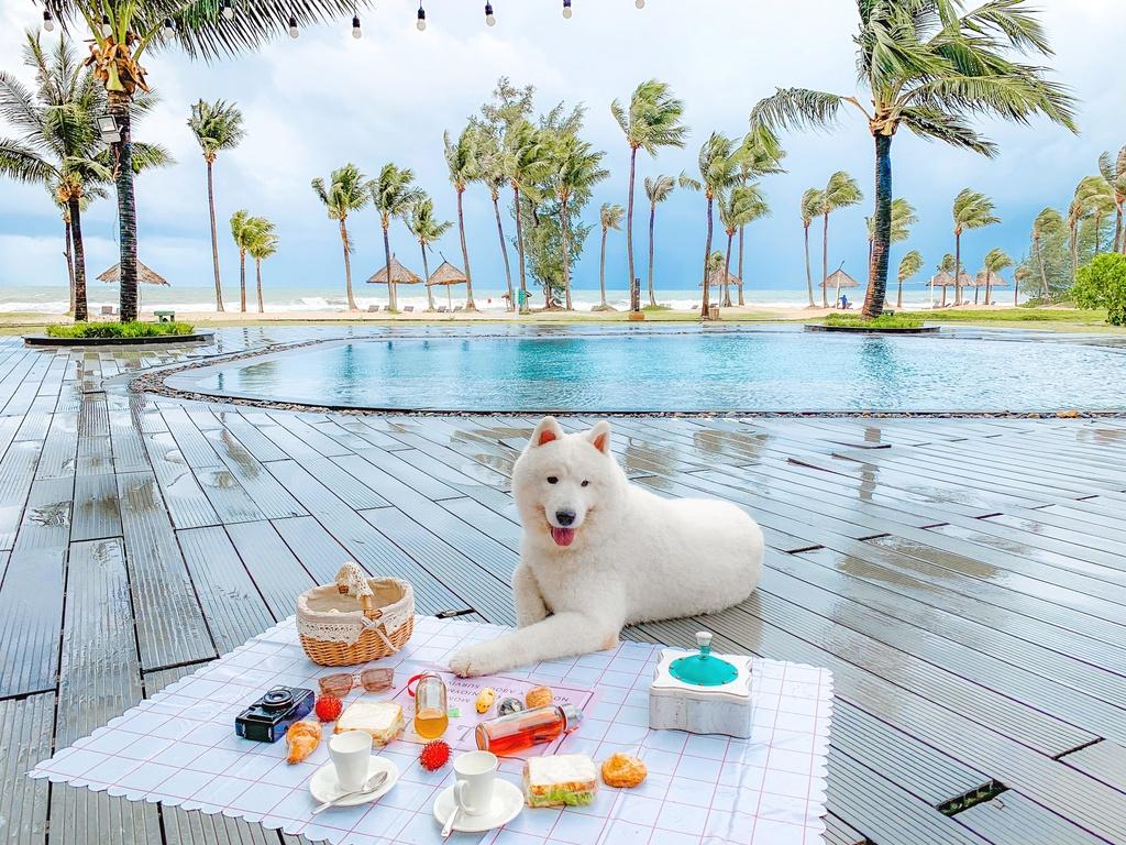Phu Quoc anh 8  - IMG_3968 - Kinh nghiệm vi vu Phú Quốc cùng thú cưng
