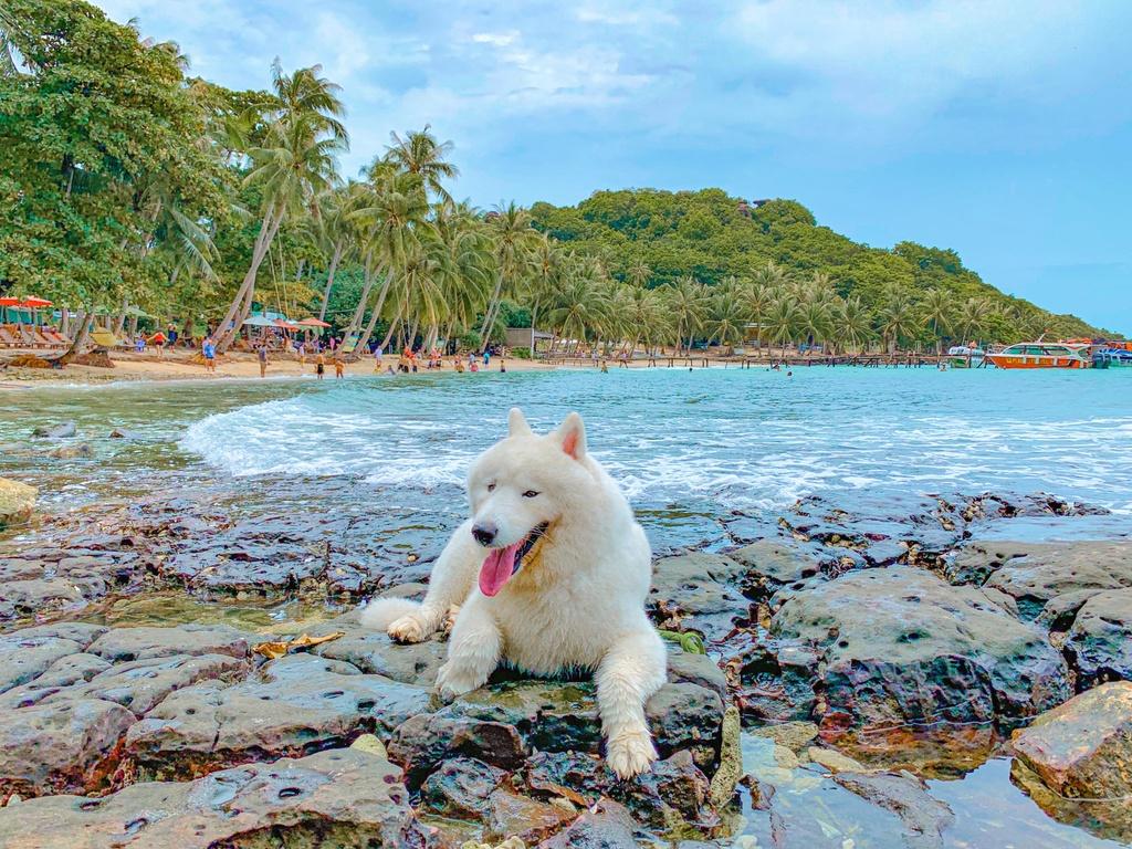Phu Quoc anh 1  - ni - Kinh nghiệm vi vu Phú Quốc cùng thú cưng