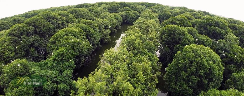 Nhung hinh anh khien du khach muon toi Viet Nam hinh anh 9 Rừng tràm ở miền Tây Nam Bộ có hệ sinh thái đặc trưng, trù phú.