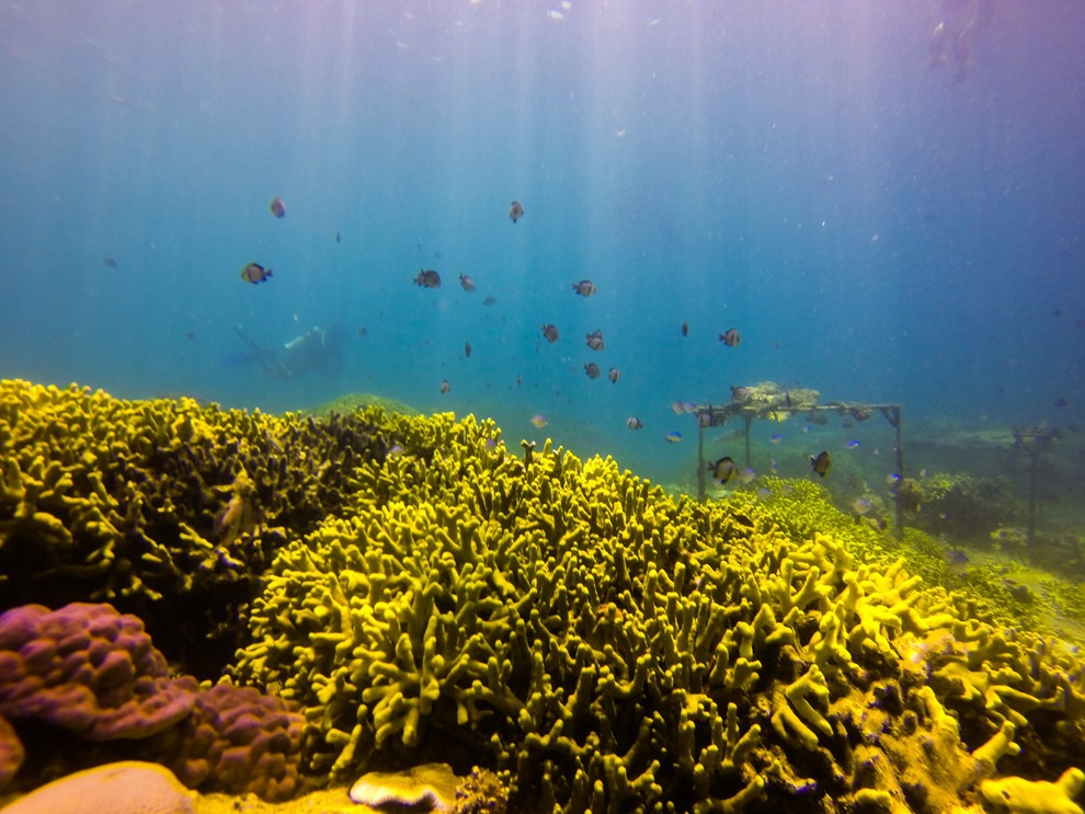 Nhung buc anh khien khach Tay muon den Viet Nam hinh anh 17 Ngay cả ở dưới mặt nước, Việt Nam cũng có những cảnh đẹp hấp dẫn. Bạn có thể lặn biển ở Nha Trang để ngắm san hô và các loài cá rực rỡ sắc màu.