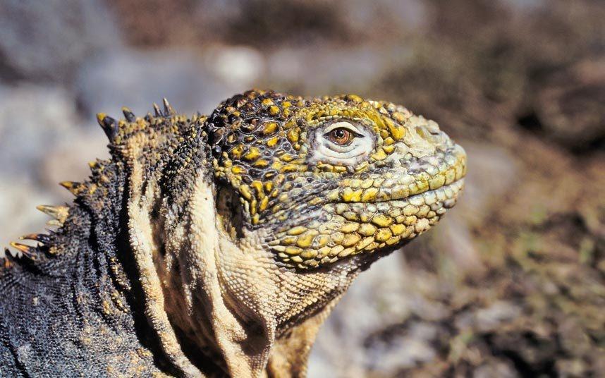 14. Khám phá quần đảo Galápagos: Nơi đã tạo cảm hứng cho Darwin viết một trong những thuyết khoa học có tầm quan trọng lớn trong lịch sử đón tới 170.000 lượt khách mỗi năm. Lượng du khách lớn ảnh hưởng không nhỏ tới môi trường sống tự nhiên ở đây. Ngoài ra, quần đảo còn phải đối mặt với mối nguy từ nhiệt độ nước tăng cao, cũng như ô nhiễm và việc đánh bắt trái phép.