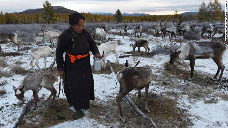 Bo toc chan tuan loc cuoi cung cua Mong Co hinh anh 2 Sinh sống ở vùng Siberia và tỉnh Khovsgol cực Nam của Mông Cổ, người Dukha phụ thuộc vào tuần lộc trên mọi phương diện của cuộc sống, từ sinh tồn, văn hóa tới tâm linh. Họ cũng là bộ tộc chăn tuần lộc duy nhất ở Mông Cổ.