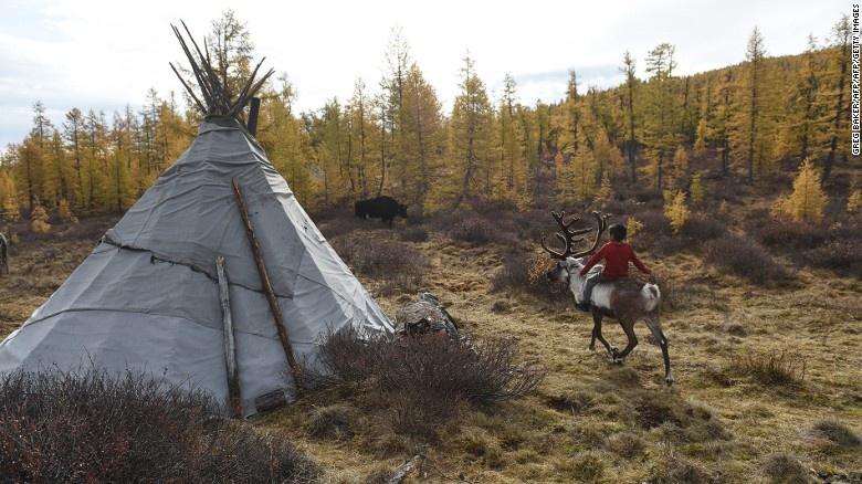 Bo toc chan tuan loc cuoi cung cua Mong Co hinh anh 5 Người Dukha không có nhiều điểm chung với các dân tộc khác ở Mông Cổ. Họ sống trong các căn lều urt, thay vì nhà lều Mông Cổ. Họ chăn nuôi tuần lộc thay cho bò, bò yak hoặc dê, theo Saman giáo thay vì đạo Phật.