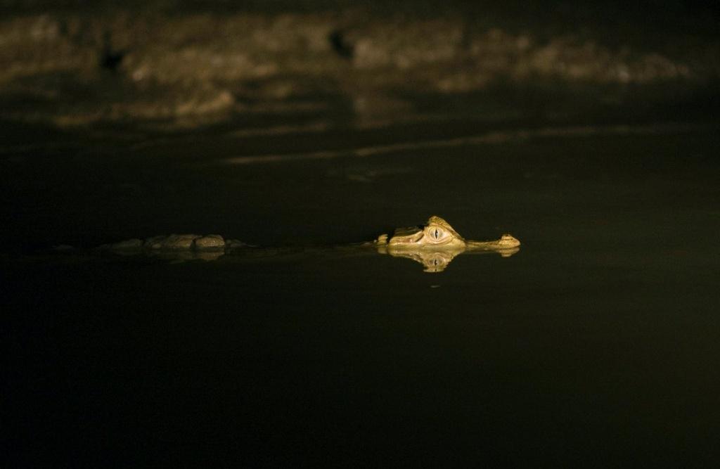 Cuoc song chat vat cua con nguoi trong rung Amazon hinh anh 7 Thức ăn luôn được khai thác từ nguồn địa phương. Người dân thường săn các loài sống ở sông như cá, rùa và cá sấu.