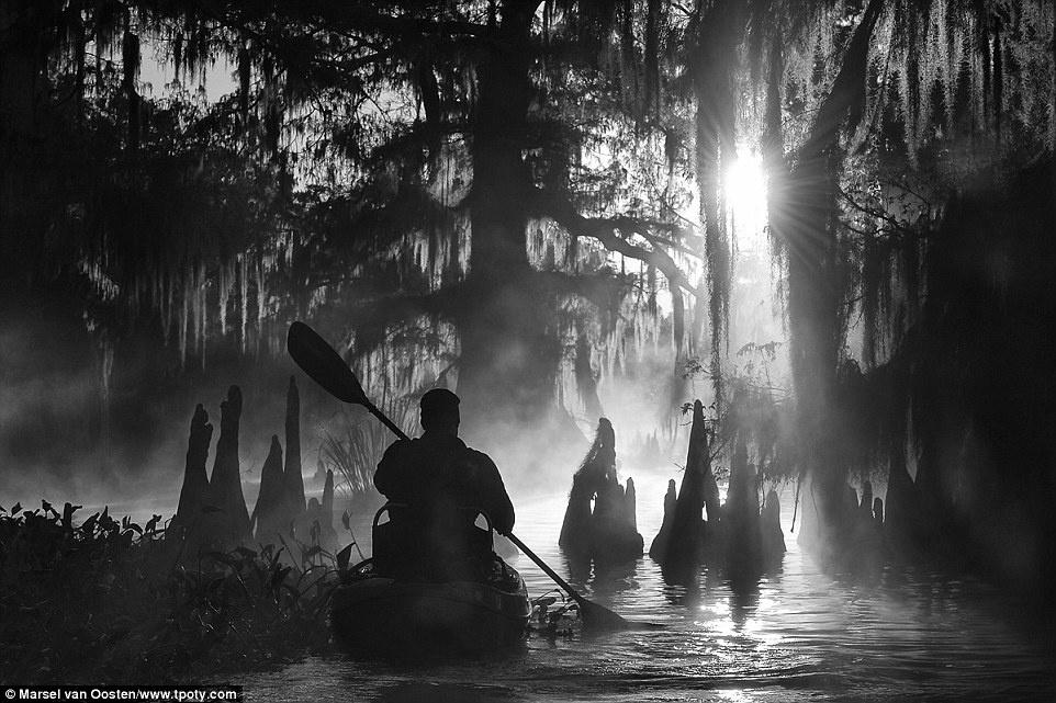 Người đoạt giải thưởng chung cuộc của năm 2015 là nhiếp ảnh gia Marsel van Oosten (Hà Lan). Trong bức ảnh giàu cảm xúc này, một người đang chèo thuyền kayak đi giữa những cây bách khổng lồ, vào một sáng mù sương ở đầm lầy Atchafalaya, Louisiana, Mỹ.
