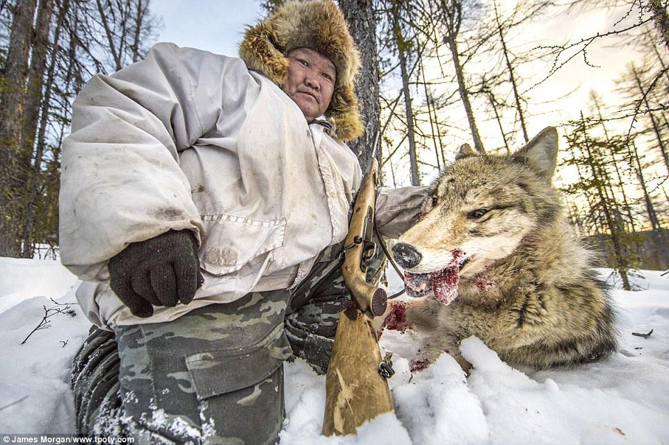 Nhiếp ảnh gia người Anh, James Morgan, đoạt giải hạng mục Thiên nhiên và môi trường với ảnh chụp một thợ săn nâng đầu con sói vừa bắn hạ ở Yakutia, Nga.