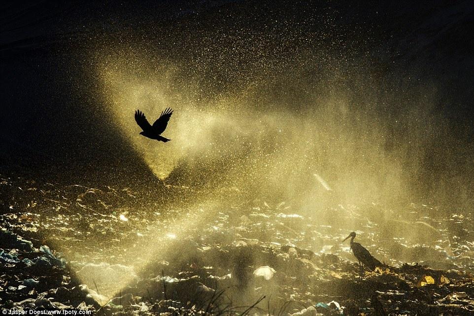 Jasper Doest đến từ Hà Lan đã giành chiến thắng mục Nước. Bức ảnh của anh bắt được đúng lúc nước phụt lên rác thải để làm loãng bớt lượng axit tiết ra trong quá trình phân hủy ở Marchena, Andalusia, Tây Ban Nha.