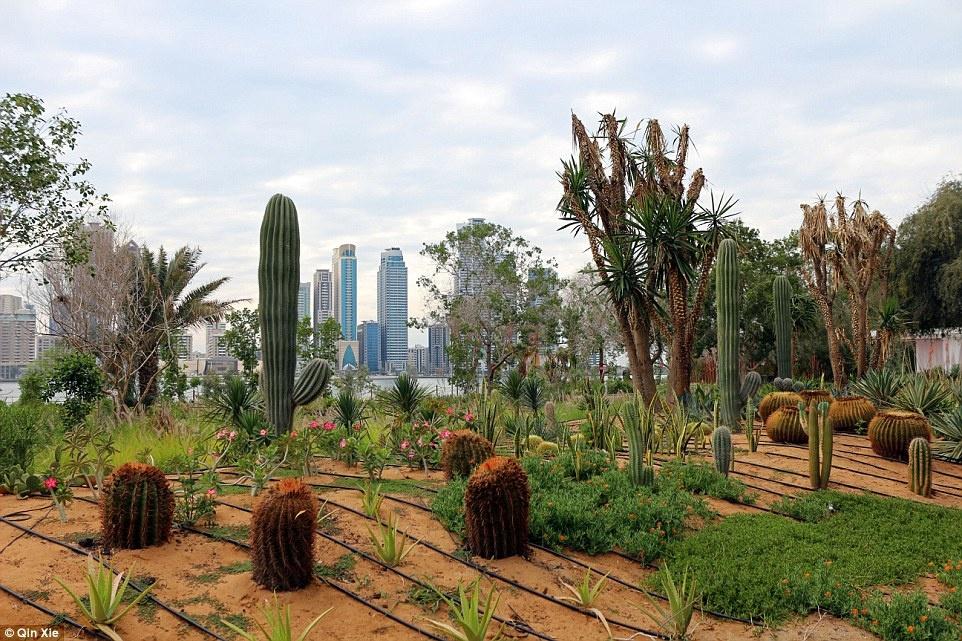 Hang xom Dubai pha cao oc xay nha truyen thong anh 3
