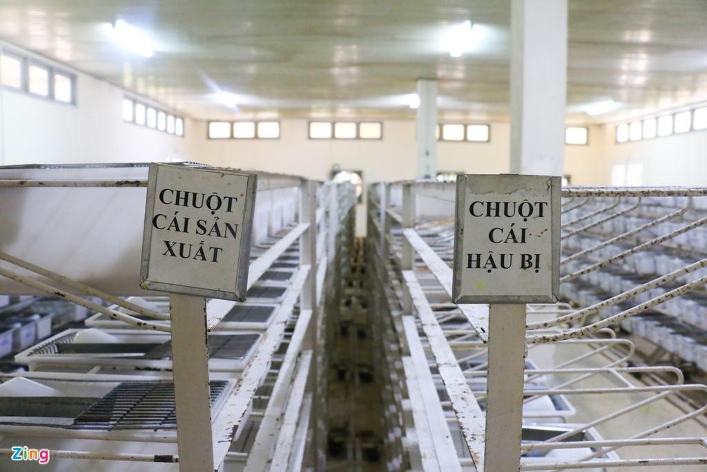 Tham 'nha' 17.000 chu chuot nam Canh Ty hinh anh 8 15_zing.jpg
