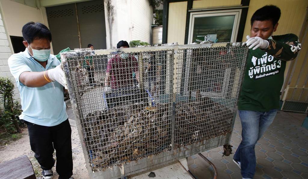 Van nan ran o Bangkok: Linh cuu hoa bat ran nhieu hon dap lua hinh anh 3