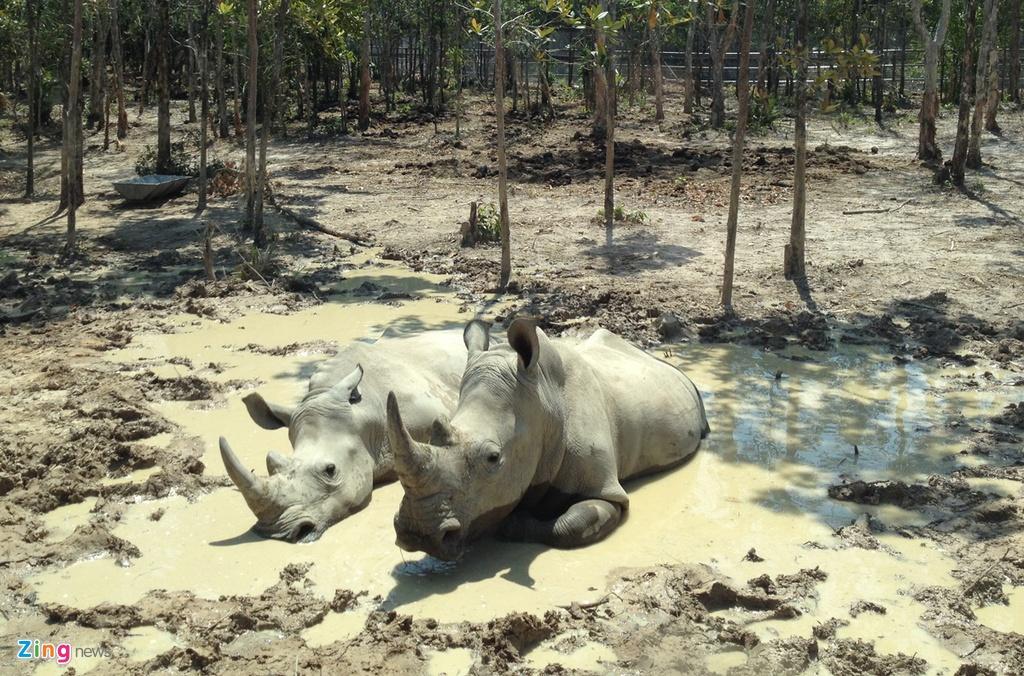 Thu chet o Vinpearl Safari: Nhung con so bat thuong hinh anh 1
