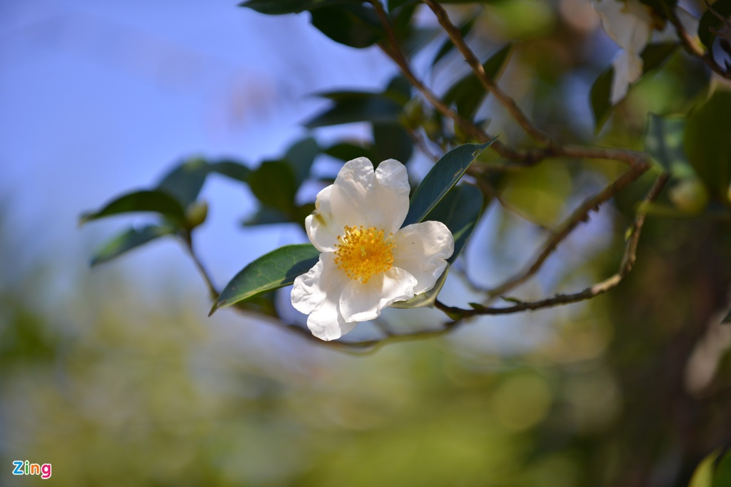 Ve Binh Lieu ngam hoa so phu trang trien doi hinh anh 2