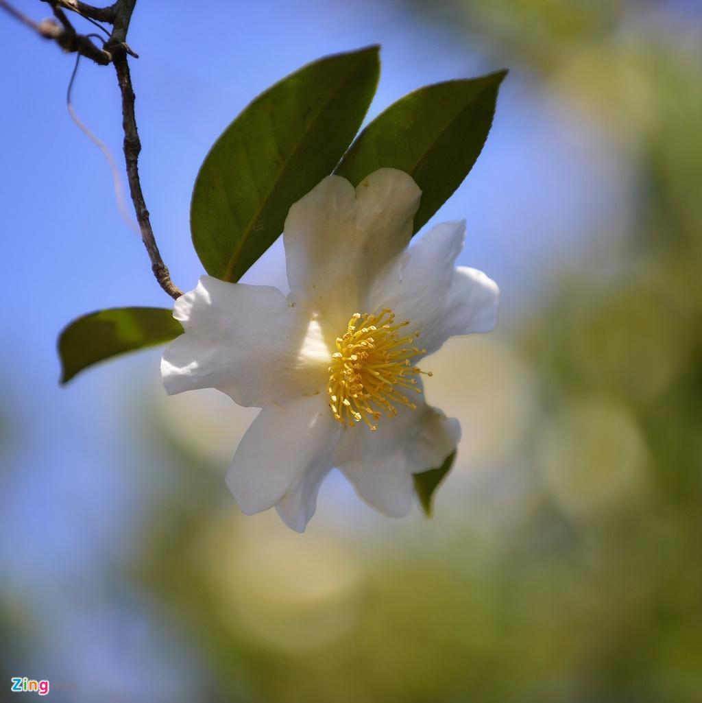 Ve Binh Lieu ngam hoa so phu trang trien doi hinh anh 3