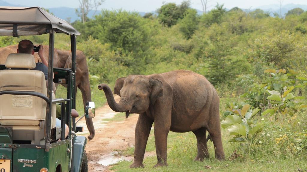Den Sri Lanka, tan huong loat trai nghiem cuon hut khong muon ve hinh anh 4