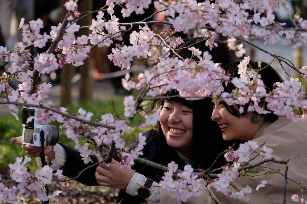 Hoa anh dao bung no tu Tokyo den Washington D.C. hinh anh 1