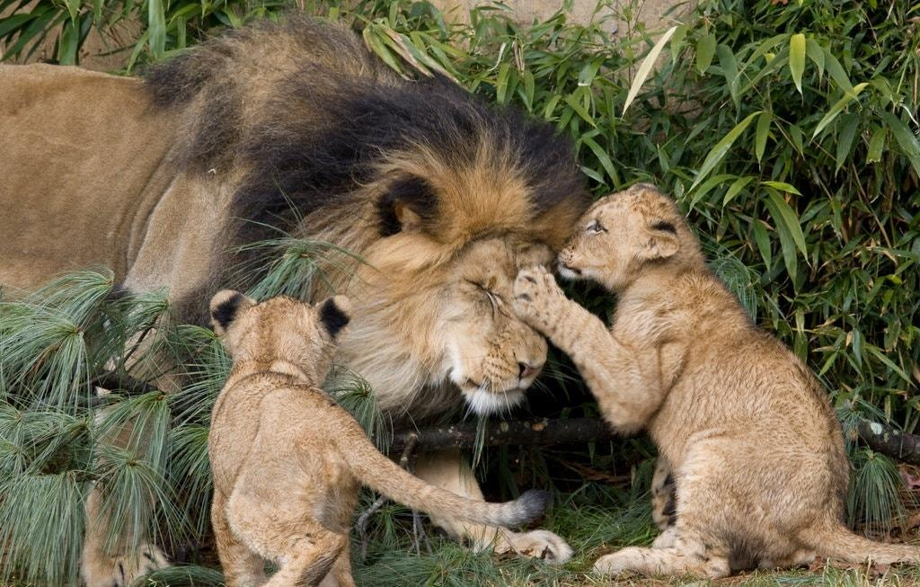 Su that dang sau xa hoi loai su tu trong Lion King anh 3