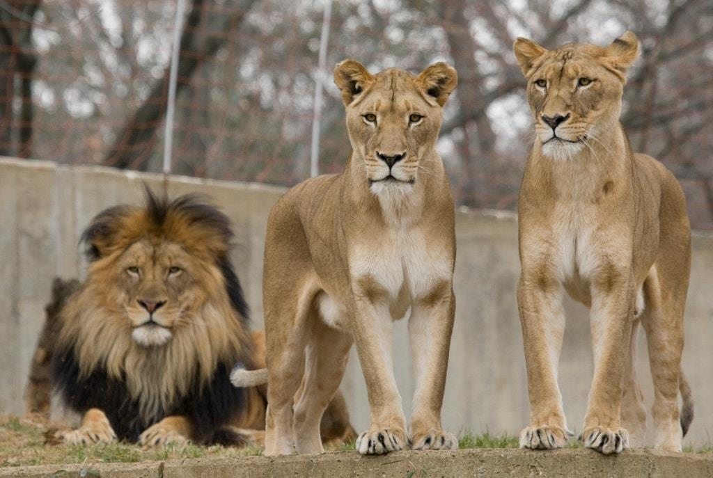 Su that dang sau xa hoi loai su tu trong Lion King anh 2